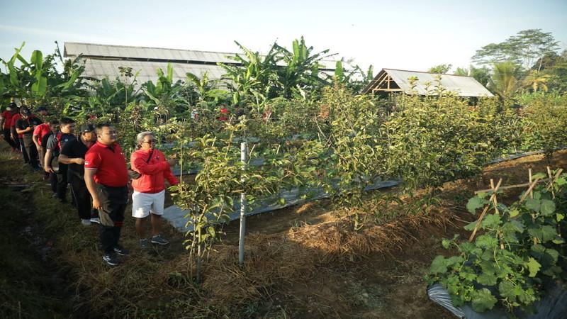 Petani Di Tampaksiring Mulai Pilih Tanam Apel Balinetizen
